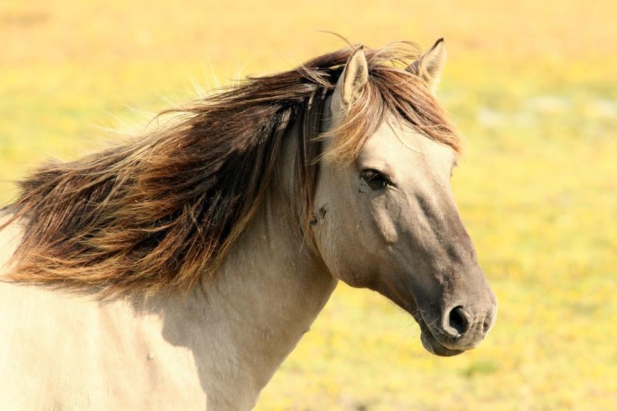 horse-animal-large