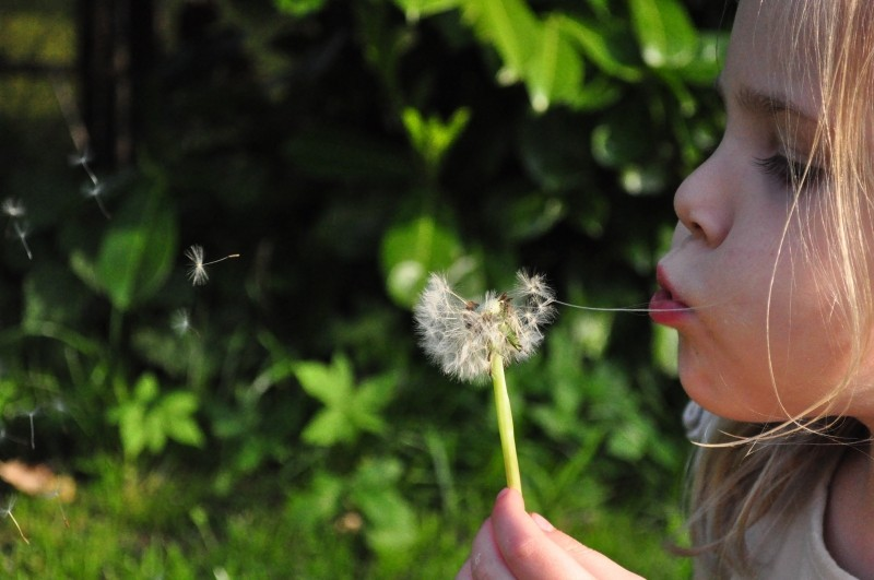 girl-blowing-dandelion-in-garden