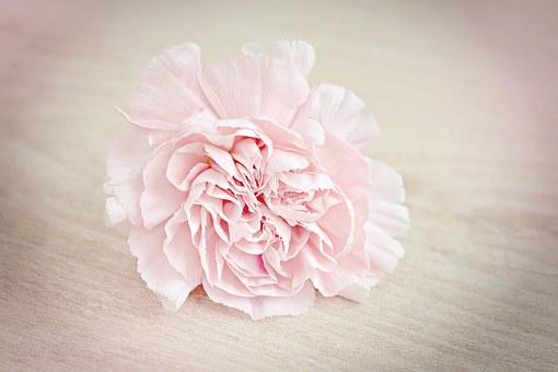flower-1364746__340