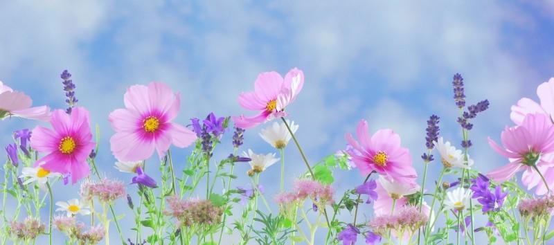 meadow-of-wild-flowers
