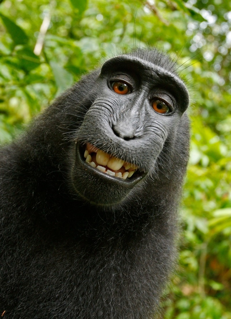 portrait-of-smiling-macaque-in-jungle
