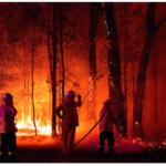 森林火災、英語で何と言う?