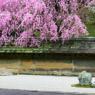 外国人が選んだ!日本の観光地ランキング25